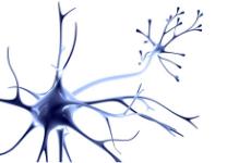 Facharzt Neurologie